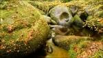 grenouille de bénitier_9(2)